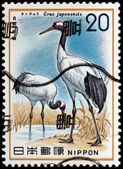 JAPAN - CIRCA 1977: A stamp printed in Japan shows Grus japonens — Stock Photo