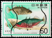 JAPAN - CIRCA 1977: A stamp printed in Japan shows Gasterosfeus  — Foto Stock