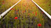 Railway with poppies — Stock Photo