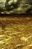 Sklizně pole a meteorologie — Stock fotografie