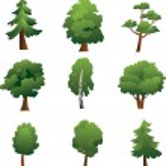 Set of trees - summer — Stock Vector