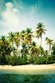 Palm tree island — Foto de Stock