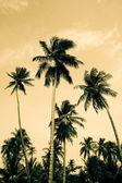 Palm trees — Stock Photo
