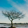Winter tree — Stock Photo #19170693