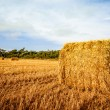 Stock Photo: Harvested straw bale