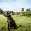 Dog lookout — Stock Photo