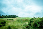 Green fields — Foto Stock