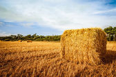 Harvested straw bale — Stock Photo