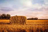 Harvested straw bale — Stockfoto