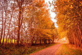 Autumn landscape — Stock Photo