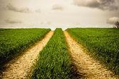Road on a field with green grass — Stok fotoğraf