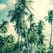 Tropical Island with palm trees — Stock Photo #47985419