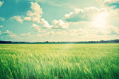 Countryside landscape with crops and sunshine — Stock Photo