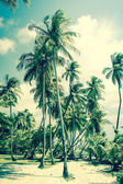 Tropical Island with palm trees — Foto de Stock