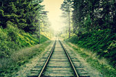 Old railroad going through the forest — Stock Photo