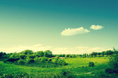 Countryside landscape with green fields — Stock Photo