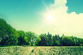 Paisagem com árvores verdes e terra seca — Foto Stock