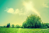 Countryside scenery with green fields and sunshine — Stock Photo