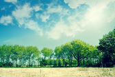 Beautiful green trees on a dry field — Стоковое фото