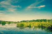 Lake scenery with green rushes — Stock Photo