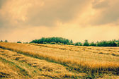 Dry agricultural field landscape — Stock Photo