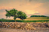 Tree growing from a woodstack — Stock Photo