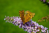 Butterfly on a flower — Foto Stock