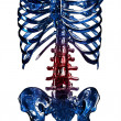 Stock Photo: 3D item of thoracic rib in pain