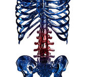 3D item of thoracic rib in pain — Stock Photo