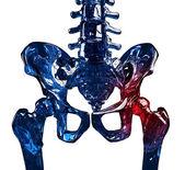 Skeleton 3D hip pain concept — Stock Photo