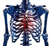 Skeleton thoracic pain — Stock Photo