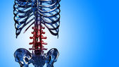 Detail of skeleton spinal and rib in pain — Stock Photo