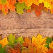 Fall leaf border — Stock Photo