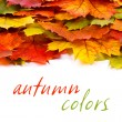 Colorful leaf border — Stock Photo