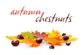 Castañas y hojas de otoño — Foto de Stock