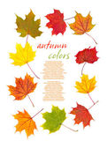 Colorful autumn leaves border — Stock Photo