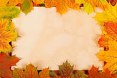 Autumn leaves as border — Stockfoto