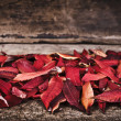 Rustic autumn — Stock Photo