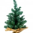 Undecorated small tree with small gift — Stock Photo