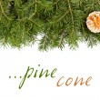 Pine twig with golden cone — ストック写真