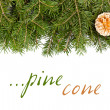 Pine twig with golden cone — Stock Photo