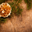Golden pine cone on branch — Stockfoto
