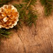 Golden pine cone on branch — Stock Photo