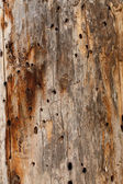 Holey wood planks — Stock Photo