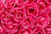 Beautiful pink color roses background — Stock Photo