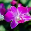 Beautiful bright orchid flowers in Botanical garden — Stock Photo