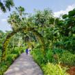 Walkway Path through the Garden  — Stock Photo #27432103
