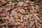 Dry leaf on the ground — Stock Photo