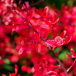 Beautiful bright red orchid flowers in Botanical garden — Stock Photo #27530125