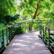 Walk way Path Through The Garden — Stockfoto